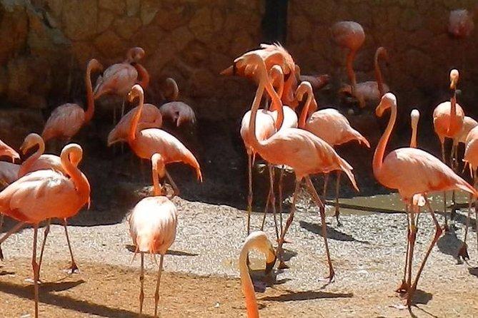 Skip the Line: San Antonio Zoo General Admission Ticket, San Antonio, TX, ESTADOS UNIDOS