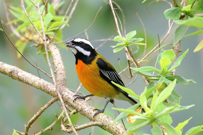 Rocklands Bird Sanctuary and Montego Bay Highlights Tour from Falmouth, Montego Bay, JAMAICA