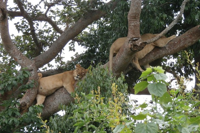 3 Days Queen Elizabeth national Park Safari Holiday, Kampala, UGANDA