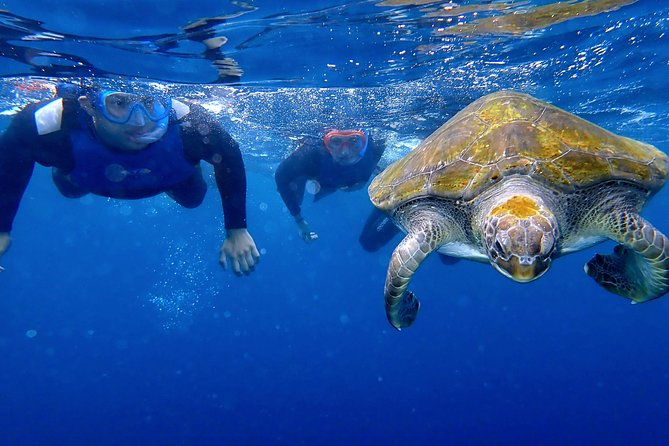 Get up close to turtles in their natural environment in a non-intrusive way on a 2.5-hour kayaking eco-adventure in Tenerife that respects their freedom and habitat.