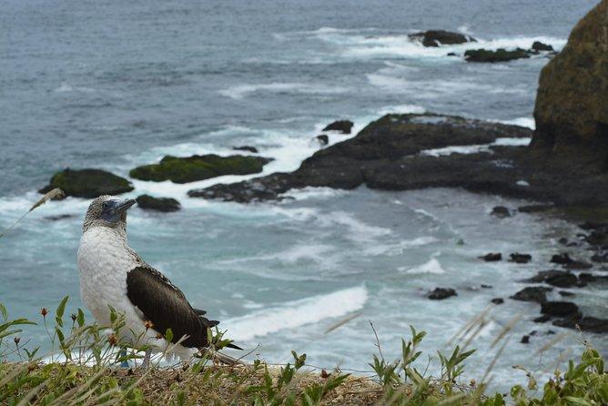 Día completo: Isla de la Plata, provincia de Manabí. (Salida desde Guayaquil), Guayaquil, ECUADOR