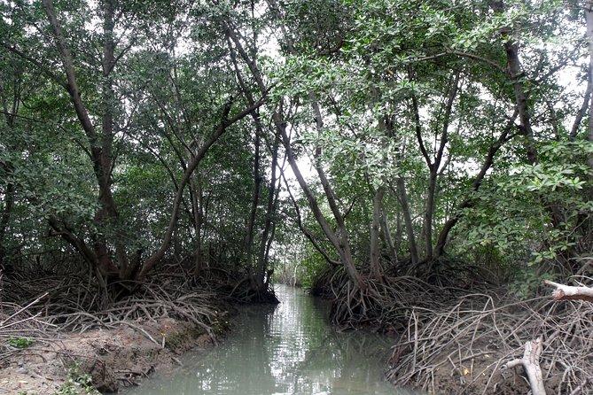 Escapada de un día: Manglares, plantación de cacao y delfines (salida desde Guayaquil), Guayaquil, ECUADOR