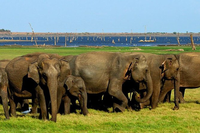 Jeep Safari To One Of National Park, Where You See Lot Of Animals On That Day, Batticaloa, Sri Lanka
