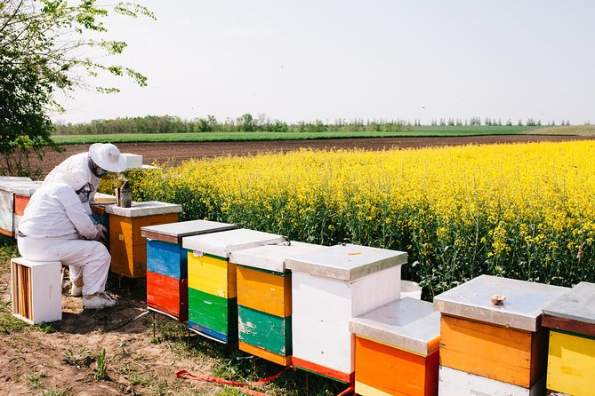 Beekeeping and Wine Tasting Tour - From Nafplion, Corinto, GRECIA