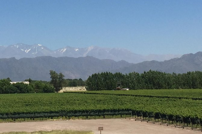 Private Wine Tasting and Vineyards Tour from Mendoza, Mendoza, ARGENTINA