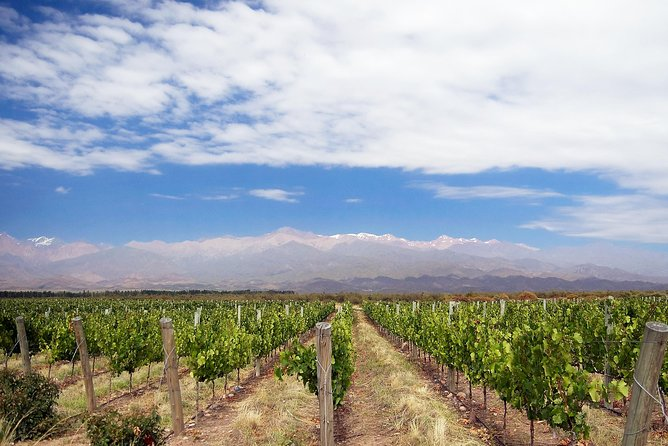 Private Tour: Full-Day Altamira Road Agritourism Experience from Mendoza, Mendoza, ARGENTINA
