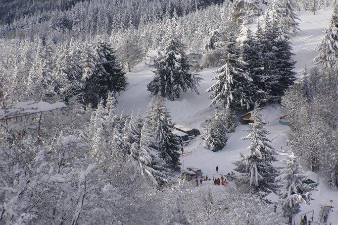 Sledge Experience at Piedras Blancas Snow Resort, Bariloche, ARGENTINA
