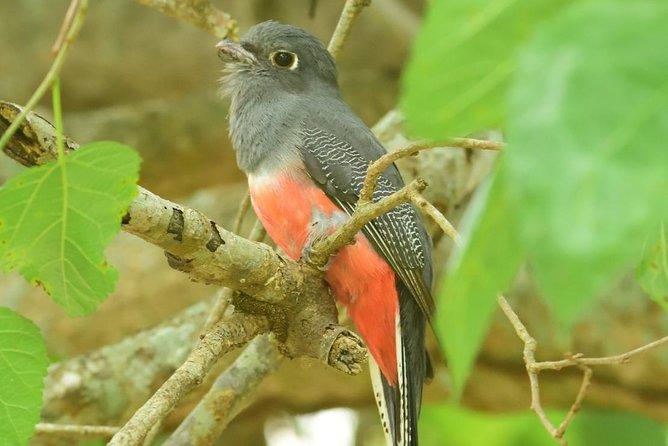 Excursión de observación de aves y naturaleza en Chaco, ,