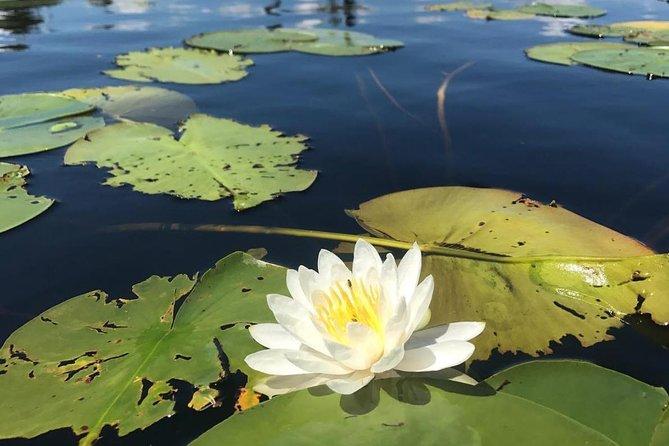 Door County Wetlands Kayak Tour, Green Bay, WI, ESTADOS UNIDOS