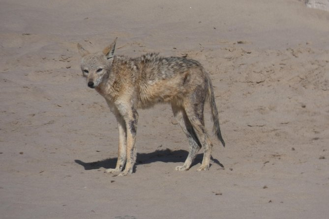 Swakopmund Cape Cross seal colony Day Tours, Swakopmund, Namíbia