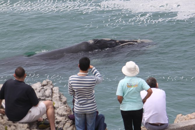 OPEN NOW <br><br>WHALE WATCHING WALKING TOURS - in Hermanus, South Africa - - <br><br>Whale Watching Walking Tours of Hermanus take you on a gentle walk along our very scenic paved walk-ways of the pretty coastal cliff tops for 2 to 3 hours, with our experienced Whale Watching Tour Guide who will take you to all the hidden coves and inlets that the Whales love to frolic in and due to the cliffs being vertical, means that the Whales can literally be only a few metres away from you. <br><br>A visit to our Whale museum will start the tour. (Entrance fee included in your tour fee).<br><br>The location schedule will take in 5 to 7 separate spots that are 2 to 4 kms apart so you will travel to each spot by luxury 7 seater kombi minibus (larger vehicles available) and then wander around each location. Tours are conducted at any time of the day that suits you.<br><br>MINIMUM group size is = 2 persons