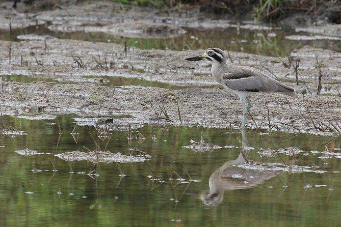 Bundala National Park Safari From Hambantota Port, Galle, SRI LANKA