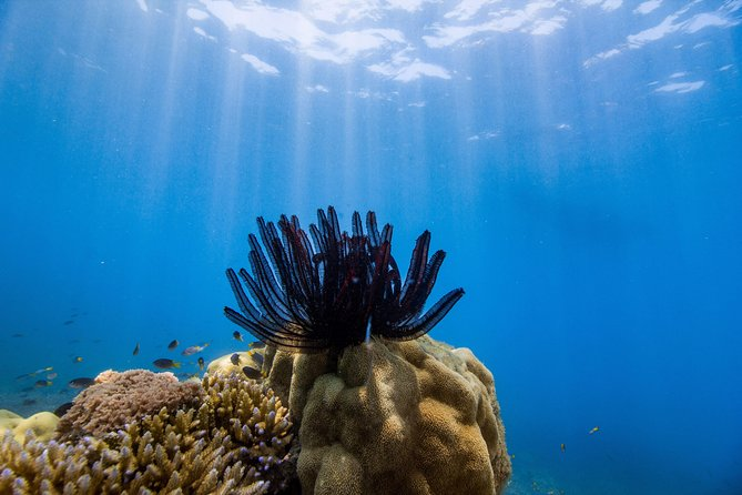 Frankland Islands Great Barrier Reef Cruise, ,