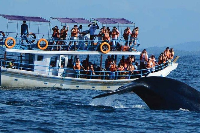 Whale Watching Experience in Mirissa, Galle, SRI LANKA
