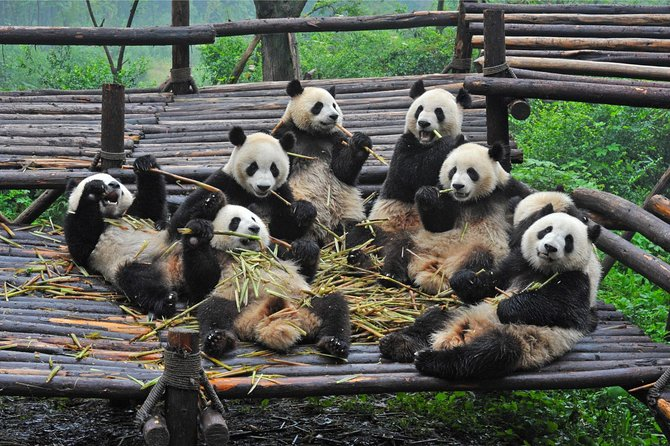 Chengdu Giant Panda Bear Research Center and Leshan Grand Buddha, Chengdu, CHINA