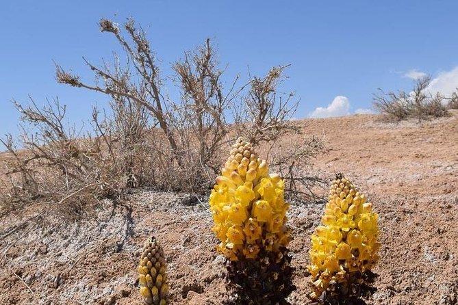 Ouarzazate - Desert - Fes 5 days 4 nights, Uarzazat, MARROCOS