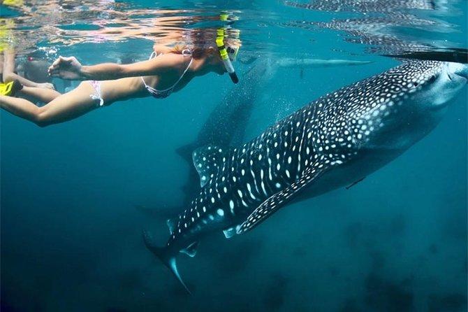 Whale Shark Encounter and Sumilon Sandbar with Kawasan Falls, ,