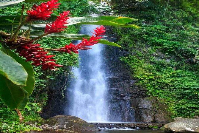 This tour starts with a 15 minutes tour of the Botanical Gardens, then we'll drive along the Leeward side of the Island to the beautiful Dark View Falls, where you will be able to hike the short trail and bath under the falls. Finally relax and enjoy a soak at the Buccament Bay.