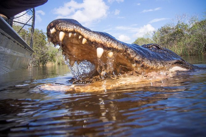 Everglades Gator Park + Miami City Tour ( Private 5 hours ), Miami, FL, ESTADOS UNIDOS