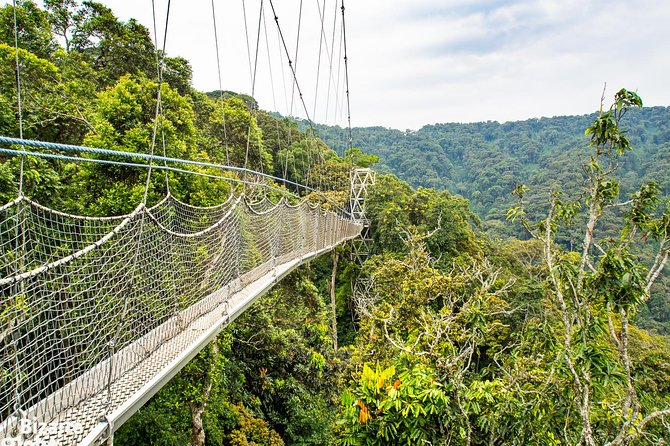 3-Day Nyungwe Forest Chimpanzee Tour – This three-day chimpanzee safari takes you to the Nyungwe rainforest in southwest Rwanda. It borders Birundi to the south and Lake Kivu and the DR Congo to the west. Nyungwe is probably the best-preserved rainforest in the mountains of Central Africa. It is located in the watershed between river Congo basin to the west and the Nile river basin to the east.