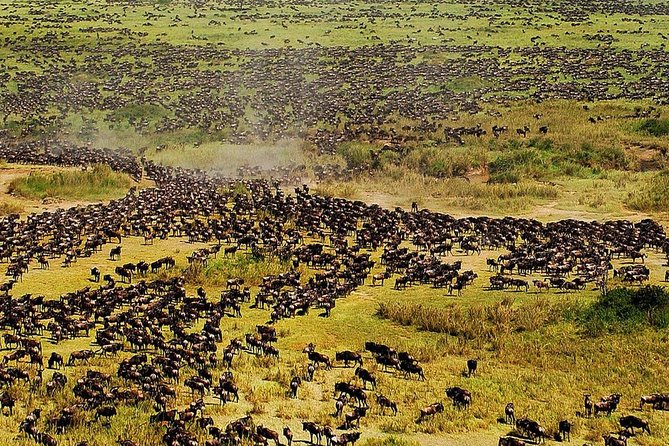 Let us take you to explore some of the most amazing points of nature in Northern Tanzania national parks. This 5-day safari is truly an unforgettable journey! You will explore Tarangire, Serengeti, Ngorongoro and Lake Duluti National Parks. Come explore Africa with us!