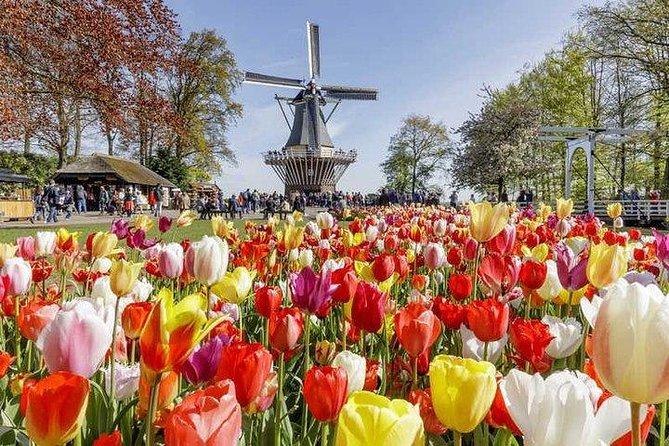 Millions of Flowers in Bloom: Keukenhof and Flower Fields, Amsterdam, HOLLAND
