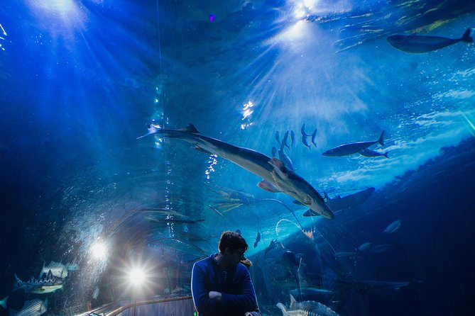 Aquarium of the Bay General Admission Ticket, San Francisco, CA, ESTADOS UNIDOS