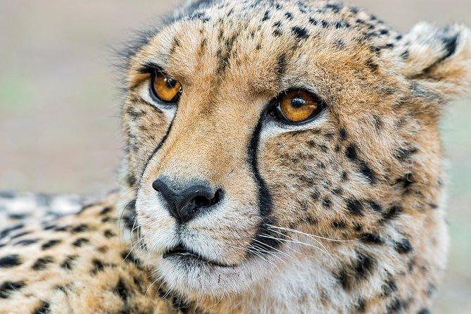 Safari de un día al Parque Nacional Kruger desde Johannesburgo, ,