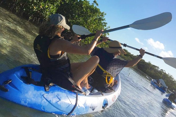 Explore and learn about the serene mangrove habitats, nursery grounds, the iguana sanctuary, marine life, birds and coastal ecology. We provide a fun, unique experience for the whole group! Our knowledge of the Mangroves is unmatched!