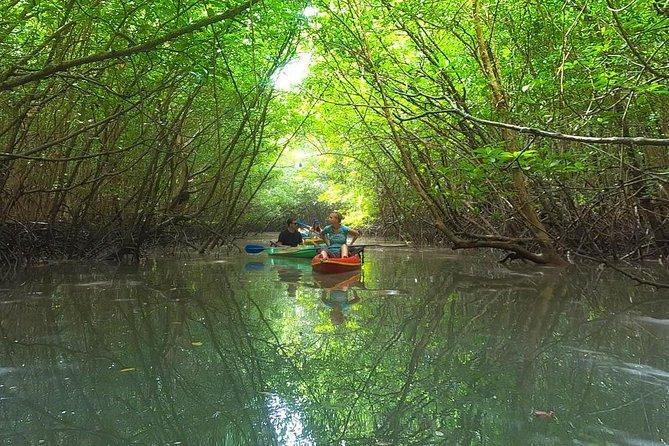 MÁS FOTOS, Khao Lak Mangrove Explorers