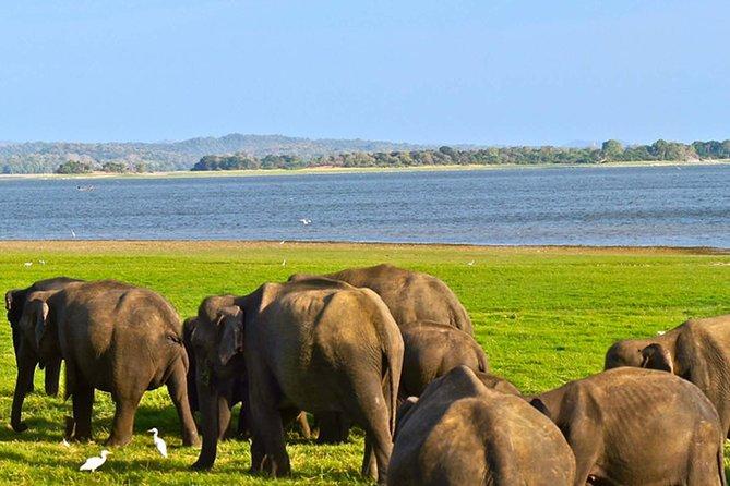 Private Tour: Kaudulla National Park Safari, Sigiriya, Sri Lanka
