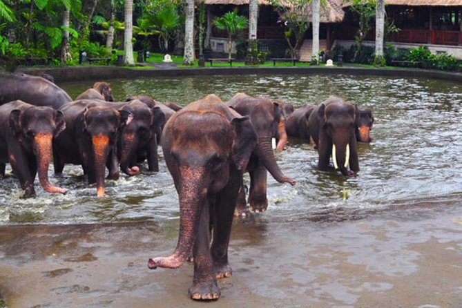 Care Experience for The Elephant and Breakfast in Ubud, ,