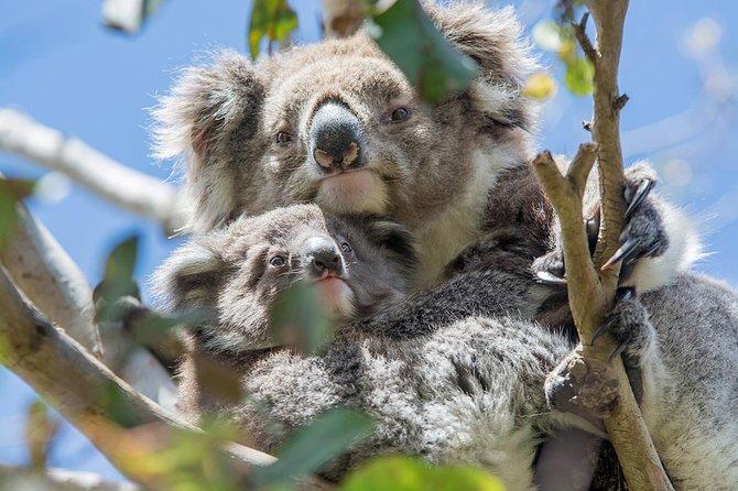 Aventura ecológica en 12 Apóstoles y Gran Carretera Oceánica desde Melbourne en sentido inverso, Melbourne, AUSTRALIA
