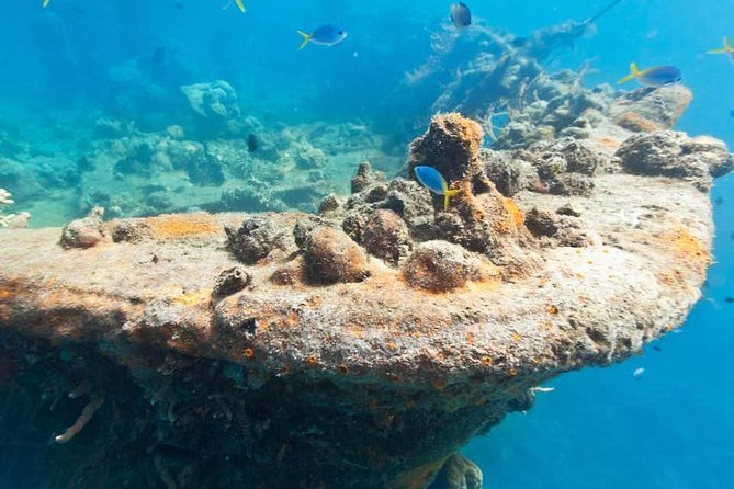 Treat yourself to a day of fun in the sun and even some exploration of World War II artifacts with this One Day tour of Coron's reefs and wrecks! <br><br>Witness the famous World War II wreck that sits at the shallow ocean floor <br><br>Snorkel above the shipwreck and be amazed with the brightly colored soft and hard corals, hydroids and sea fans attached to it despite of rusts covering the ship. <br><br>The tour begins with a stop at Calumbuyan Island, where you'll enjoy walking on the sand bar and the gorgeous tropical views in the island's surroundings.<br><br>DESTINATION: Pass Island, Lusong Ship Wreck, Lusong Coral Garden, East Tangat Wreck <br>