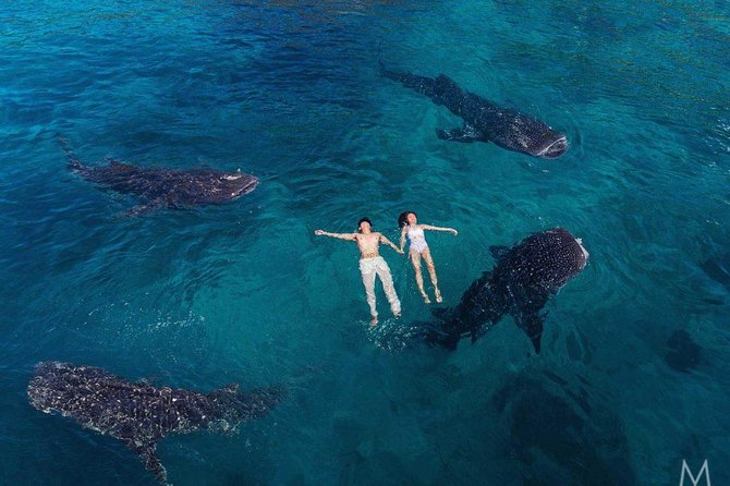 Whale Shark Watching and Sumilon Sandbar Private Tour Package, ,
