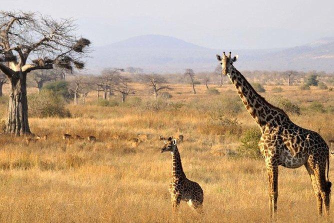 10 Days 8 Nights Tanzania Unforgettable Comfort Camping Safari, Arusha, Tanzania
