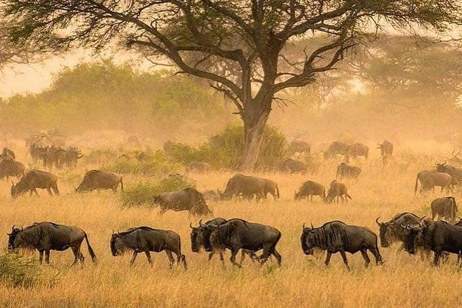 this tour takes you to the most popular wildlife destination in the world on a short time & accomodation comfort <br><br>this destinations are home to wild cats. its the reason the famous lion king movie was based on serengeti national park, also you will have a chance to see thousands of wildbeest lucky enough their migration if its the season also you will explore the beauty of the ngorongoro crater