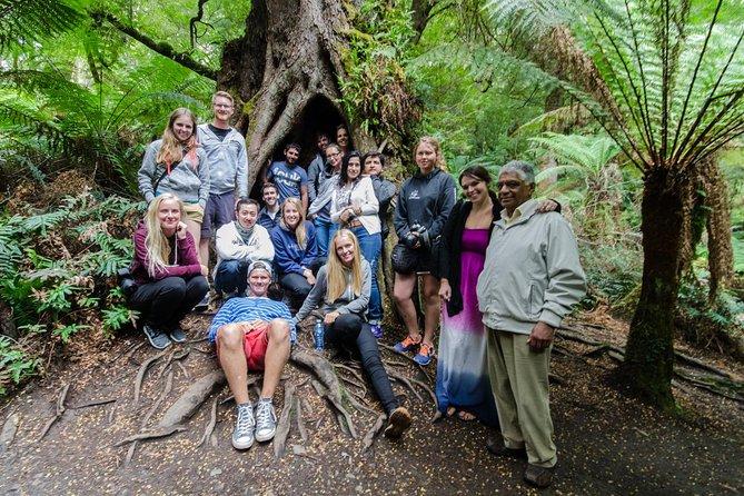 Excursión de un día por la Gran Carretera Oceánica y los 12 apóstoles desde Melbourne, Melbourne, AUSTRALIA