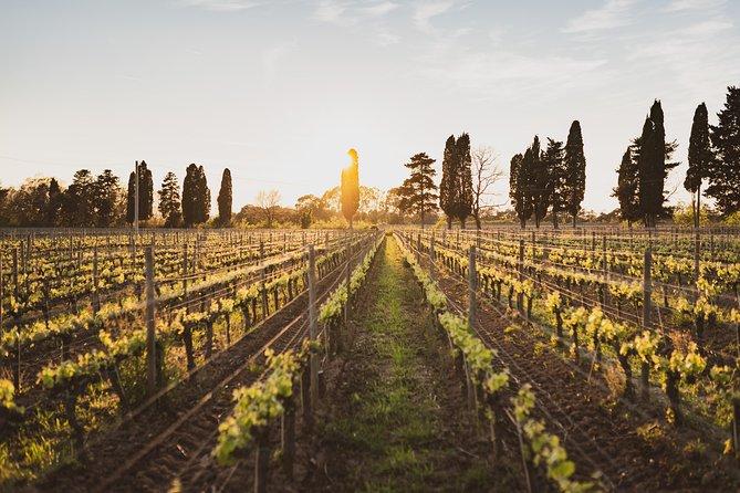 Supertuscan wine day tour from Livorno, Lucca, Pisa or Piombino, Livorno, ITALY