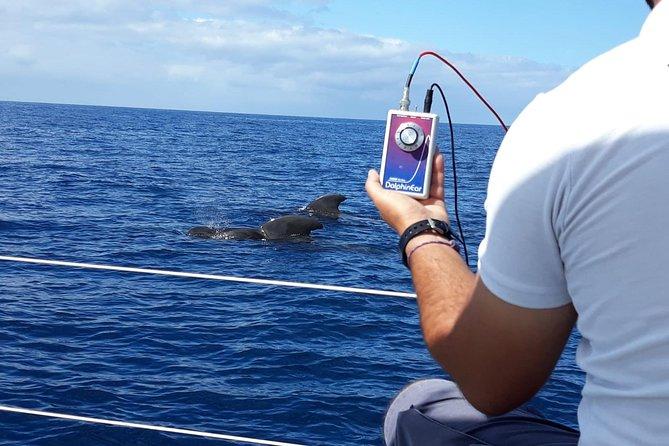 Velero de avistamiento de ballenas y delfines con bebidas, aperitivos y tiempo para nadar, Tenerife, ESPAÑA