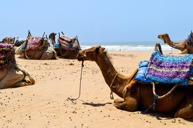 Camel Ride on the Beach of Essaouira, Esauira, MARRUECOS