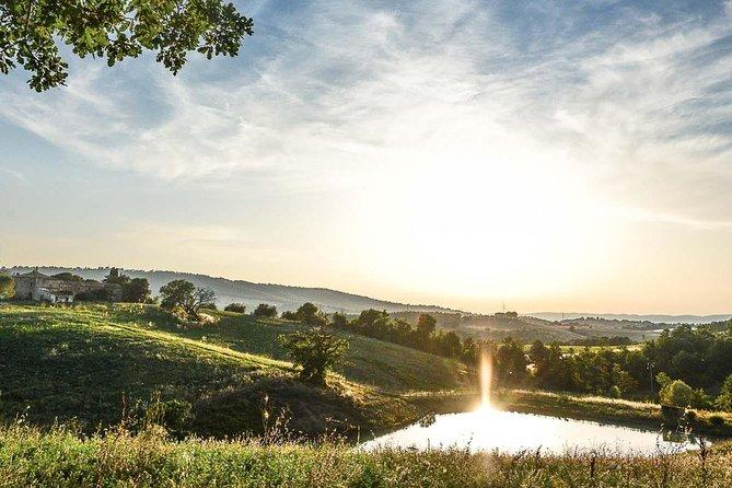 Supertuscan wine day tour from Livorno, Lucca, Pisa or Piombino, Livorno, Itália