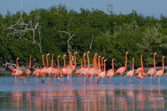 This English/Spanish spoken guided daytour to the nature reserve of Ria Lagartos, the pink lakes of Las Coloradas and the amazing Maya site of Ek Balam make this combination of nature and archaeology a must do during your visit in Valladolid. You won´t regret it!