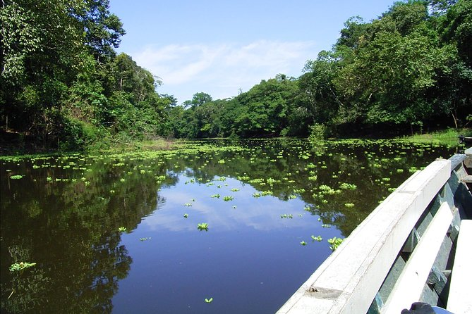A trip to the Tambopata National Reserve should not be missed even if you do not have a lot of time. That is why we have created this 4 days - 3 nights tour to the Amazon where you will enjoy the best of the rainforest! You will be able to observe many different species of plants and animals, as well as enjoy our exciting jungle excursions.