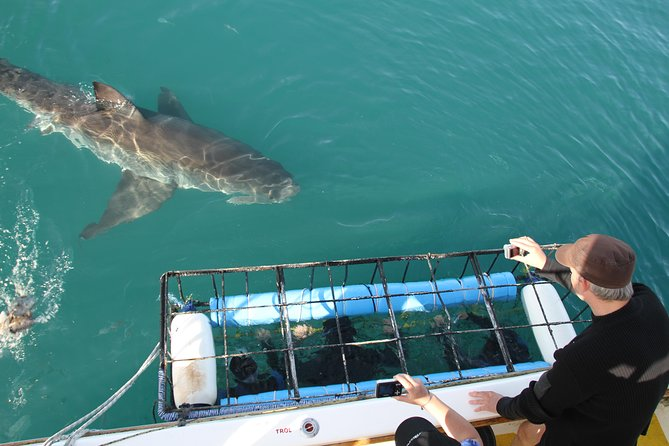 While there are wealth of shark viewing and diving opportunities in South Africa, Gansbaai and Shark Alley in particular, is one of the best areas to experience sharks in their natural habitat.<br><br>Shark Alley is a channel of water between two islands: Dyer Island and Geyser Rock. As Dyer Island is home to 50 000 Cape Fur seals, it provides ample hunting opportunities for the apex predator.<br><br>This is a bucket list experience for you to go eye to eye with the worlds greatest predator.<br><br>With the Dyer Island Group nearby, and home to 50 000 cape fur seals, it is the world's capital for Great White sharks. Boasting the largest population of these majestic creatures year-round, shark cage diving and shark viewing trips are a must!