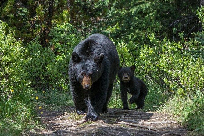 Jasper Evening Wildlife Tour, Jasper, CANADA