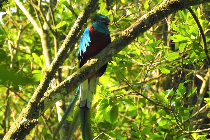 This bird watching tour takes place in Santiago Atitlan if you are in Panajachel you can send us your hotel where one of our specialized guide will go for you and will take you by boat to Santiago where we will take a track that will take us at the entrance of the reserve.<br><br>The rey Tepepul trail is located in the mountains that connects the Pacific of Guatemala, the type of forest is cloudy and you walk for about 3 kilometers that will take about 3 hours approximately it is recommended to have a good condition.<br> Also a place that connects with nature. There are river, mostly time of the year is humid. olso you can see local people warking in farm.<br><br>the birds that we can find we have resplendet quetzal, azure-rumped tanager, norhern emerald tucanet, crested guan, black thrush, brown backed solitare and more.