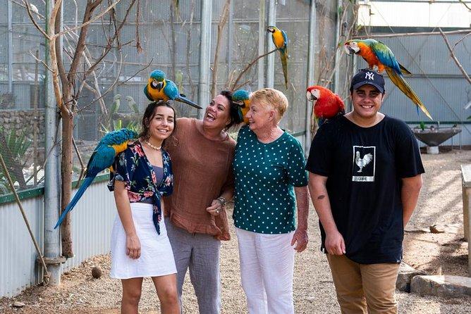 Maleny Botanic Gardens Bird Aviary Experience Ticket, Noosa y Sunshine Coast, Austrália