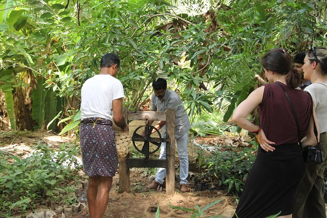 The activities like toddy tapping, local fishing, coir making, handweaving etc. are priceless! Find the biodiversity treasure of the village at the household of a local scientist-cum-toddy tapper.