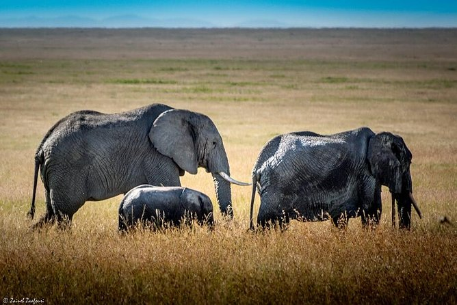 -Experience the Serengeti and Ngorongoro Crater in 3 Days<br>-Flexibility- You can start your tour at anytime<br>- Travel with a highly experienced local guide<br>- Explore the famous wildlife area in just 3 days <br>- Enjoy the Big five animals<br>